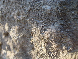 Fossils embedded in the rock