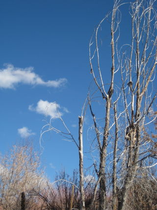 Winter tree and clouds