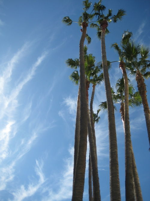 La palm trees 2