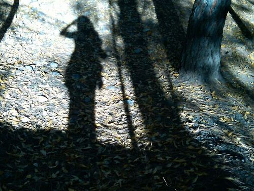 Fall shadow