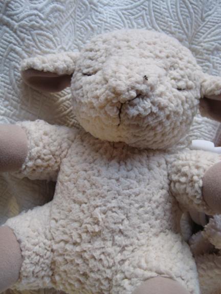 15 sheep