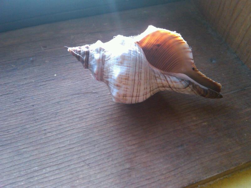 Denver shell