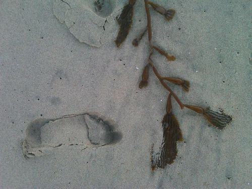 Kelp and footprint