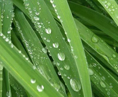 Grass waterdrops 2