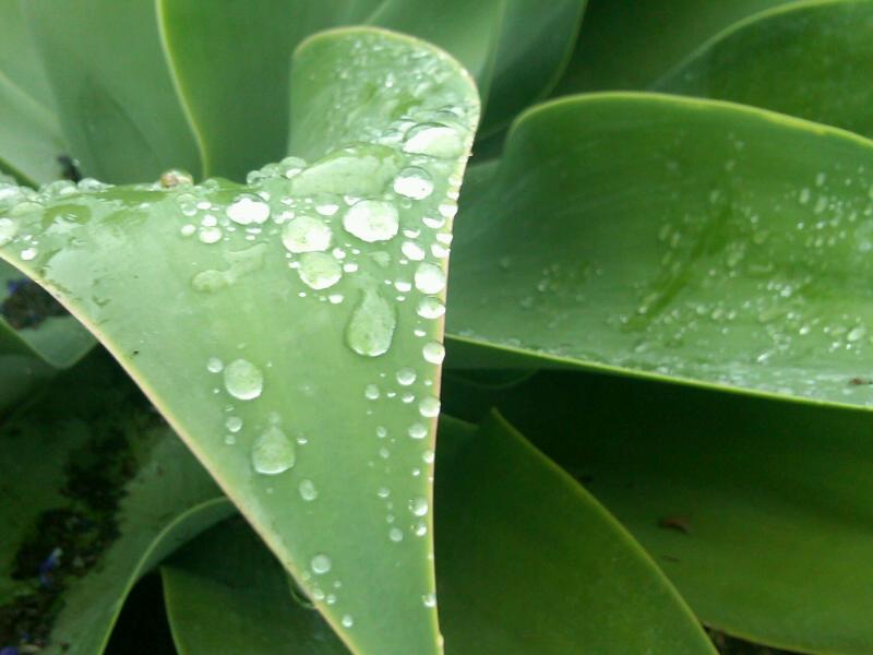 Succulent waterdrops