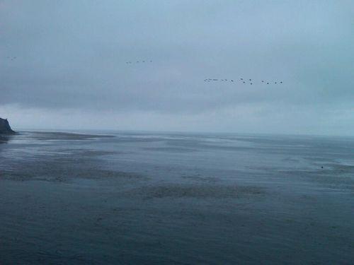 Birds over ocean