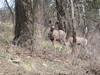Deer_gaze